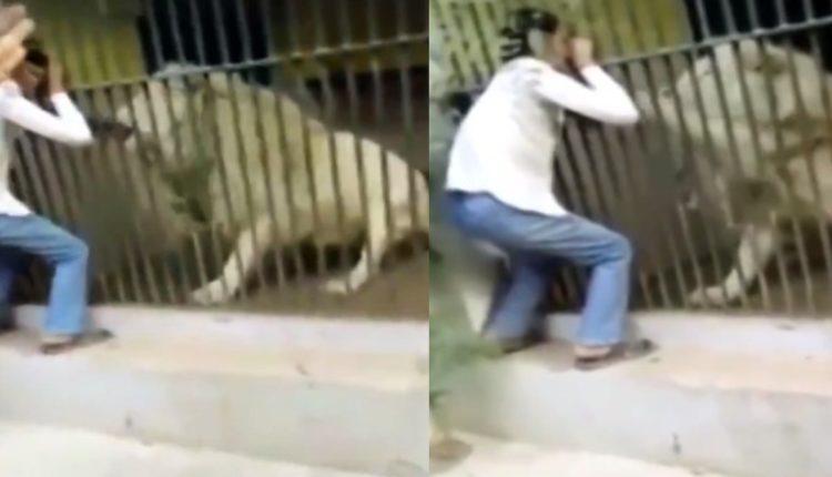 leon ataca cuidador