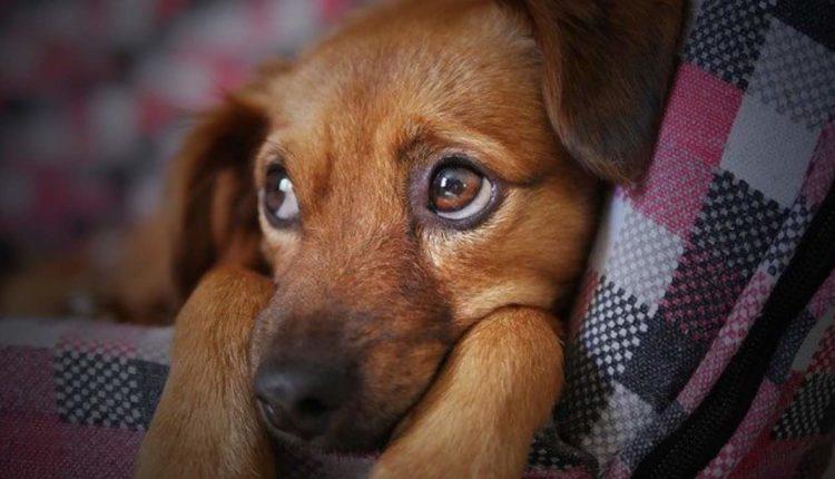 national geographic programa especial perros