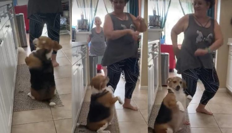 perrito bailando reggaeton