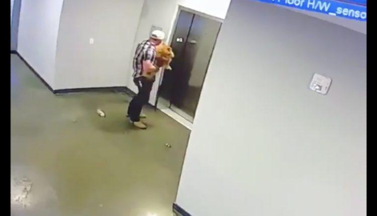 perrito elevador