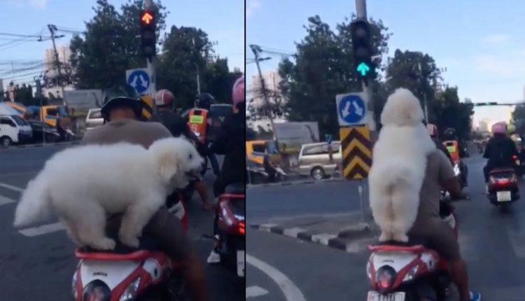 perrito motociclista