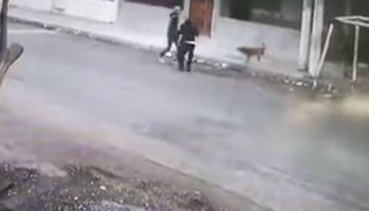 perritos frustan asalto