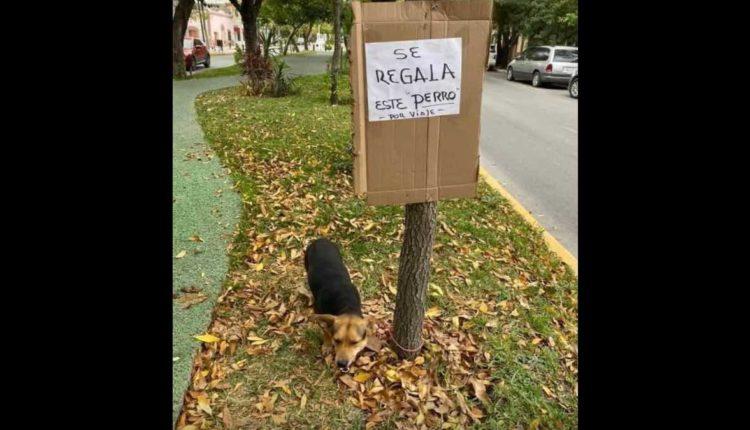 abandonan perro ciudad victoria