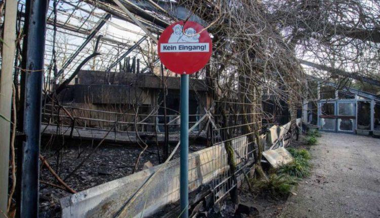 incendiio zoologico alemania