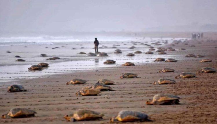 mueren tortugas oaxaca