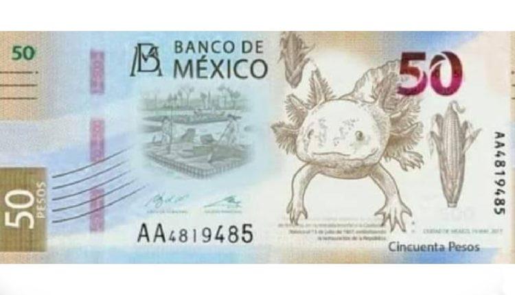 nuevo billete 50 pesos