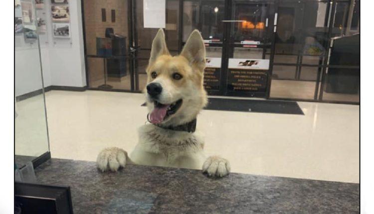 perro chico texas